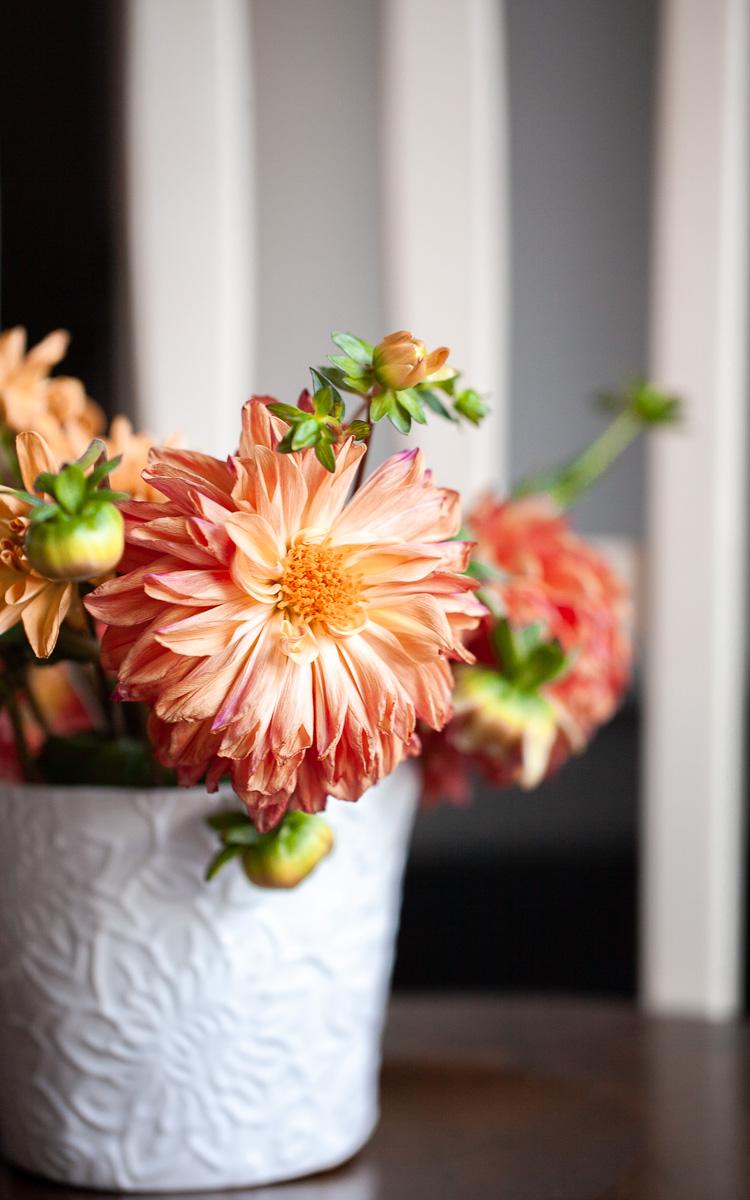 Dahlia Fall Flowers_screensaver